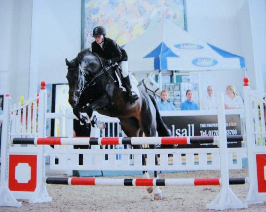 Dressage Horse Stud Mares Stallions Youngstock in Denbighshire and Wales